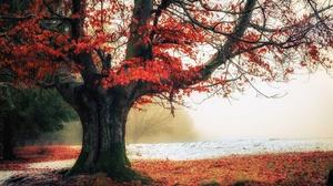 Fall Fog Nature Tree 2048x1230 Wallpaper