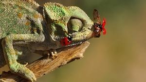 Lizard Reptile Insect Ladybug 2048x1475 wallpaper