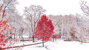 Central Park Snow 4480x2520 wallpaper