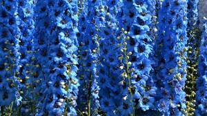Blue Flower 2700x1500 wallpaper