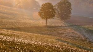 Landscape Scenic Field Flower Tree Fog Morning Sunrise Forest 1920x1200 Wallpaper