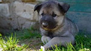 Dog Pet Baby Animal 4032x3024 Wallpaper