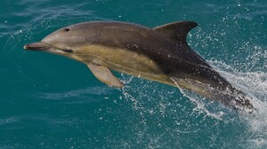 Dolphin Jump 2048x1345 Wallpaper