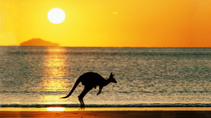 Australia Beach Jump Kangaroo Sea Sun Sunset 1920x1200 Wallpaper