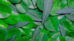 Greenery Leaf Nature 5511x3674 wallpaper