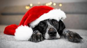 Dog Pet Santa Hat 2048x1152 Wallpaper