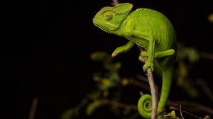 Chameleon Lizard Wildlife 2048x1367 Wallpaper