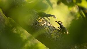 Beetle Macro Stag Beetle 3840x2160 Wallpaper