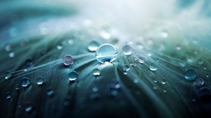 Macro Nature Water Drop 2560x1600 wallpaper