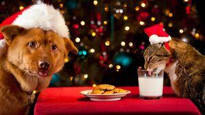 Cat Christmas Christmas Lights Dog Pet 2000x1125 Wallpaper