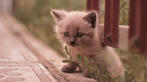 Baby Animal Cat Kitten Pet 2048x1152 wallpaper