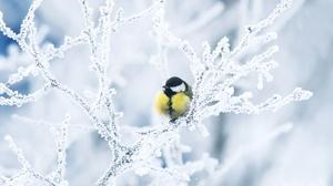 Bird Branch Snow Titmouse Wildlife Winter 1920x1363 Wallpaper