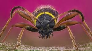 Close Up Insect Macro Wasp 2048x1310 Wallpaper