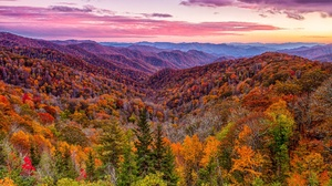 Fall Mountain Forest Nature 2048x1365 Wallpaper