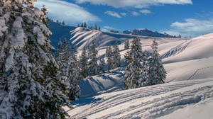 Cloud Fir Tree Mountain Ski Snow 3000x1974 Wallpaper