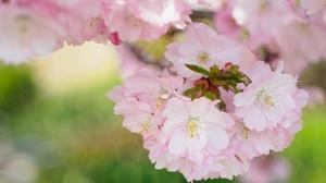 Blossom Bokeh Flower Nature Pink Flower Spring 2048x1290 Wallpaper