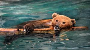 Animal Bear 3800x2348 Wallpaper