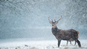 Winter Snow Snowfall 3840x2160 Wallpaper