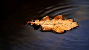 Fall Nature Leaves Water 2048x1361 Wallpaper