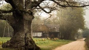 Tree House 5232x3488 Wallpaper