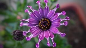Daisy Flower Purple Flower 5120x2880 Wallpaper