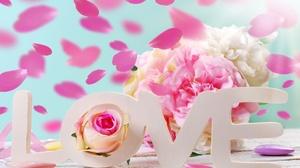 Rose Flower Petal 3872x2592 Wallpaper
