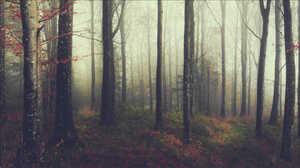 Forest Trees Fall Mist 1500x846 Wallpaper