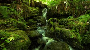 Earth Greenery Jungle Rock Stream Waterfall 2560x1600 Wallpaper