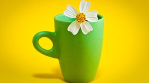 Cosmos Cup White Flower 2560x1440 Wallpaper