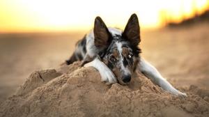 Dog Pet Sand 2048x1367 Wallpaper
