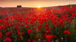 Nature Flower Red Flower Summer Sunrise 2000x1276 wallpaper