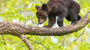 Cub Baby Animal Wildlife 2048x1365 Wallpaper
