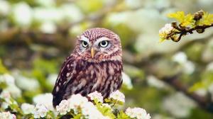 Bird Blossom Depth Of Field Owl White Flower Wildlife 1920x1280 Wallpaper