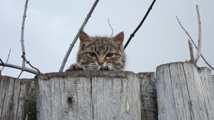 Animal Cat 3264x2176 Wallpaper