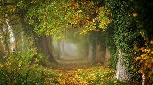 Canopy Fall Foliage Forest Path 2048x1365 Wallpaper