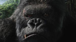 King Kong Face Gorilla Animal 1920x1200 Wallpaper