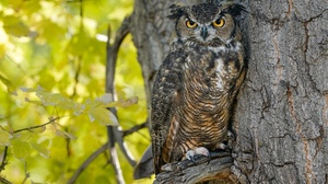 Bird Owl Wildlife 2048x1365 wallpaper