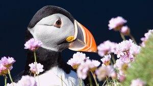 Bird Close Up Face Flower Beak 3840x2160 Wallpaper