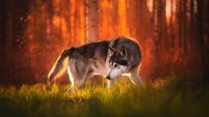 Dog 2048x1365 wallpaper