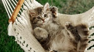 Kitten Cute 1920x1080 Wallpaper