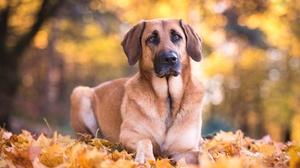 Bokeh Depth Of Field Dog Fall Pet 2048x1367 Wallpaper