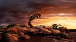 Boulders Dead Horse Point State Park Juniper Lonely Tree Rock Sunrise Tree Utah 2048x1366 Wallpaper