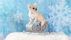 Dog Baby Animal Christmas Ornaments Puppy Pet 2000x1500 Wallpaper