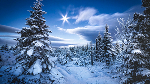 Winter Trees Snow Snow Covered Sunlight Sun Clouds Sky Landscape Nature Photography 1920x1280 Wallpaper