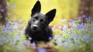 Depth Of Field Dog Flower Pet 2048x1392 Wallpaper
