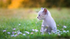 Flower Kitten Baby Animal Pet 2048x1254 Wallpaper