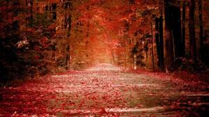 Fall Leaf 1920x1200 Wallpaper