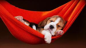 Dog Puppy Sleeping Hammock 1920x1080 Wallpaper