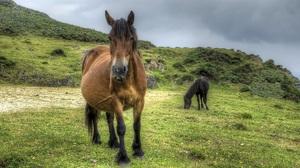 Animal Horse 2048x1128 Wallpaper
