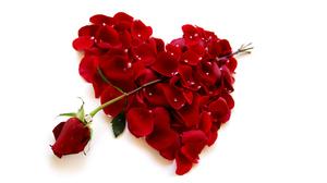 Artistic Heart Heart Shaped Petal Red Red Rose 9601x5401 Wallpaper